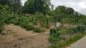 Lindowsches Haus - Obstgarten